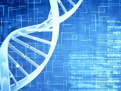 抗体基因库